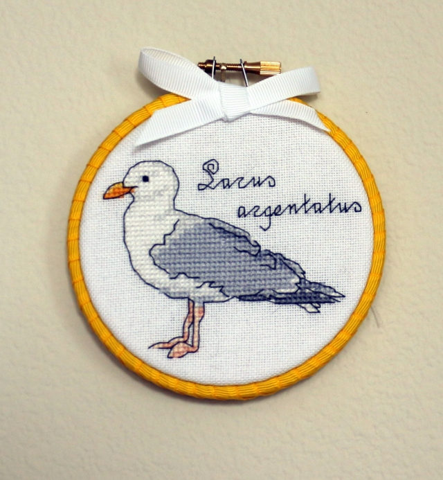 Mr Seagull: Larus argentatus