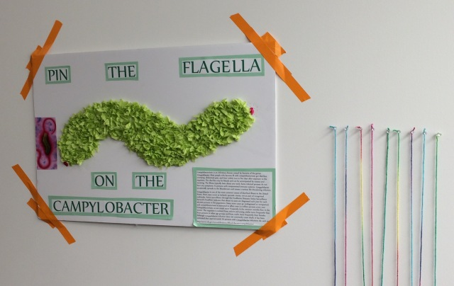 Pin the Flagella on the Campylobacter